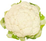Cabbage PNG free Image Download 12