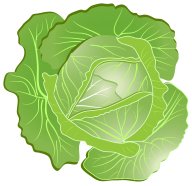 Cabbage PNG free Image Download 18