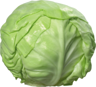 Cabbage PNG free Image Download 2