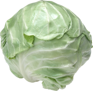Cabbage PNG free Image Download 22
