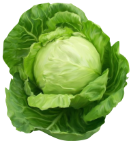 Cabbage PNG free Image Download 23