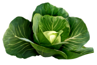 Cabbage PNG free Image Download 24