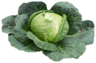 Cabbage PNG free Image Download 28