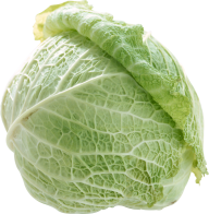 Cabbage PNG free Image Download 5