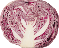 Cabbage PNG free Image Download 6