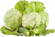 Cabbage PNG free Image Download 8