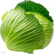 Cabbage PNG free Image Download 9