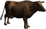 Cartoon Cow Png