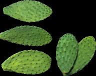 castus PNG free Image Download 7