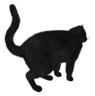 Cat Back Side Png