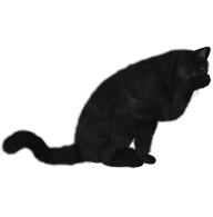 Cat Cleaning Hands Png