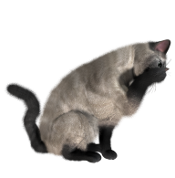 Cat Eating Png