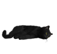 Cat Laid Down Png