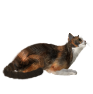 Cat Png Looking for Food