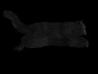 Cat Running Png