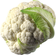 cauliflower PNG free Image Download 12
