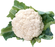 cauliflower PNG free Image Download 14
