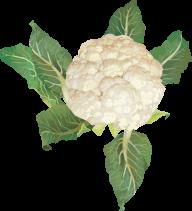 cauliflower PNG free Image Download 15