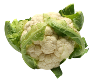 cauliflower PNG free Image Download 25