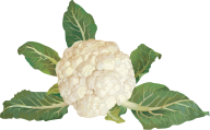 cauliflower PNG free Image Download 27