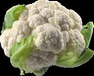 cauliflower PNG free Image Download 7