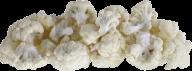 cauliflower PNG free Image Download 9