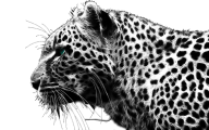 Cheetah Face Png