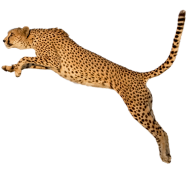 Cheetah Jumping Png Image Free Download