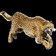 Cheetah Jumping Png