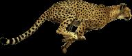 Cheetah Png HD