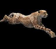 Cheetah Png Logo