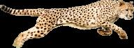 Cheetah Png Running