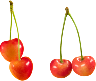 cherry png free download 10