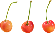 cherry png free download 12