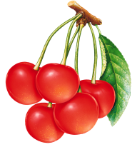 cherry png free download 6