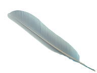 Clipart Feather PNg