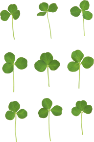 clover png free download 1