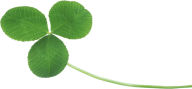 clover png free download 3