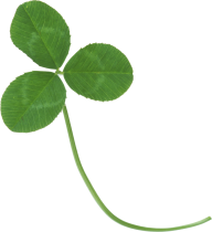 clover png free download 4