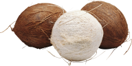 coconut png free download 1
