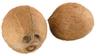 coconut png free download 10