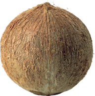 coconut png free download 13