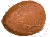 coconut png free download 15