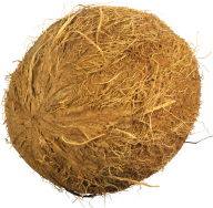 coconut png free download 16
