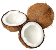 coconut png free download 17
