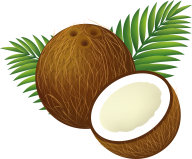 coconut png free download 19