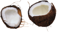 coconut png free download 2