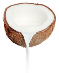 coconut png free download 20