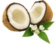 coconut png free download 22