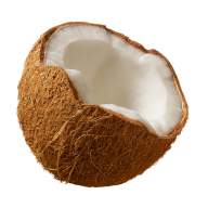 coconut png free download 25